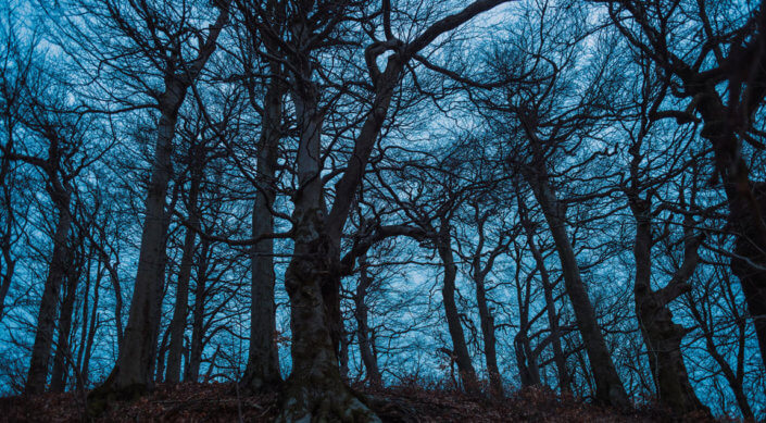 Location scouting (Sudetenland - northern Czechia ancient oak forest)